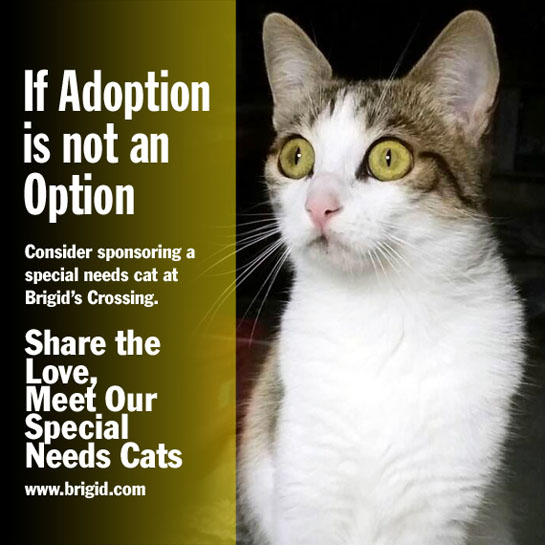 Visit Our Special Needs Cats